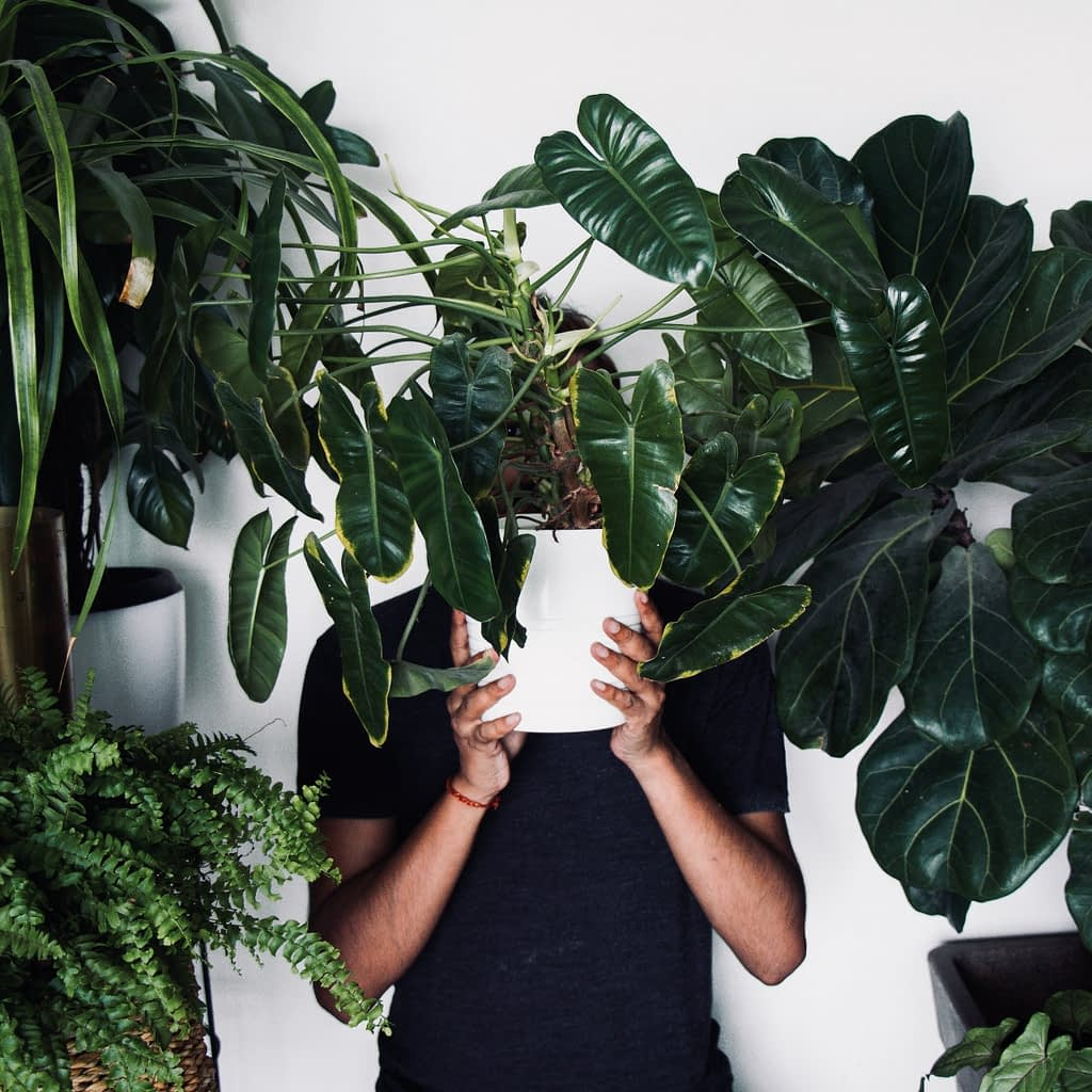 Man standing against white wall holding plant in white pot in front of his face, surrounded by more green plants