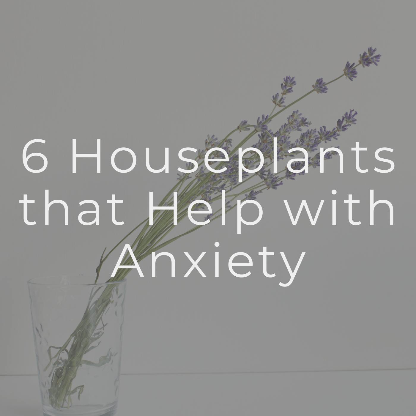 6 Houseplants that Help with Anxiety